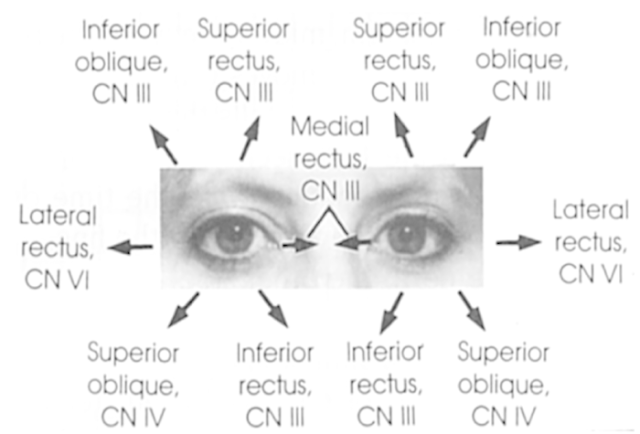 eye_movements1359393912968