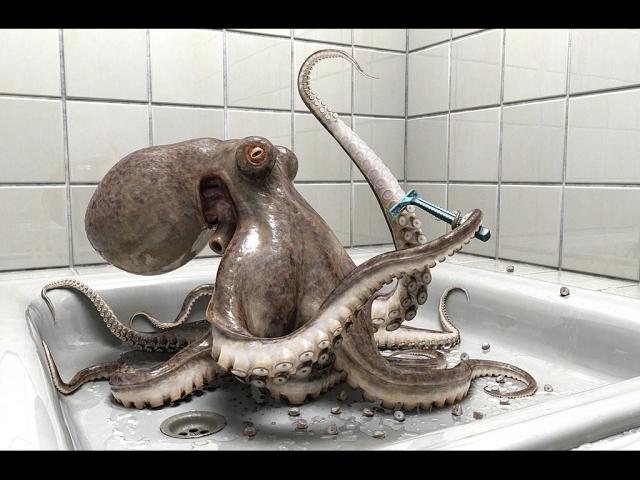 octopus_desktop_1024x768_wallpaper-436437