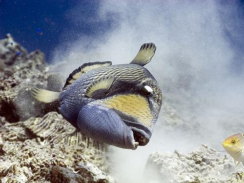 FISH sideways Titan-trigger-attacks