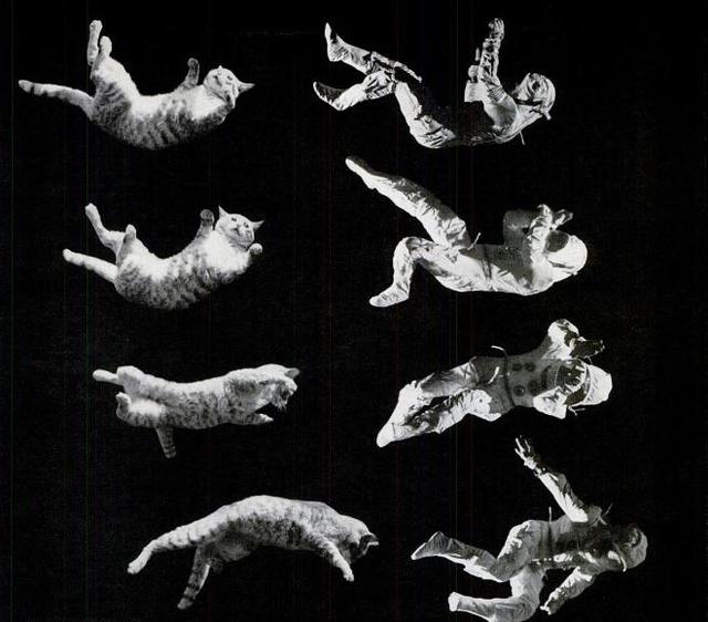 GRAVITY CAT ASTRONAUT ku-xlarge
